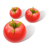 Tomatos 1 Royalty Free Stock Image