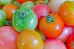 Tomatos Stock Photo