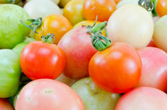 Tomatos Royalty Free Stock Photography