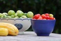 Tomatos and pumpkins Stock Photography