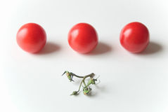 Tomatos in a row. Tree small tomatos in a row with the green piece of tree aligned in center Royalty Free Stock Photo