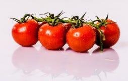 Tomatos on white background Stock Image
