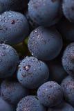 Tomatsammansättning på svart bakgrund Fotografering för Bildbyråer