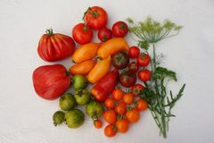 Tomatskördtomater av olika variationer royaltyfri bild