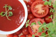 Tomatsoppa, Tricolors pasta, italiensk pasta, vanlig pasta, kortkort beskjuter pasta, Royaltyfria Bilder