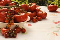 Tomattomater Arkivbild