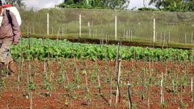 Tomatträdgård, Da-Latstad, Lam Dong landskap, Vietnam stock video