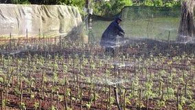 Tomatträdgård, Da-Latstad, Lam Dong landskap, Vietnam lager videofilmer