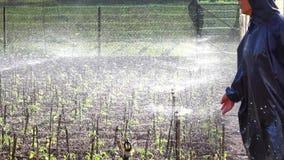 Tomatträdgård, Da-Latstad, Lam Dong landskap, Vietnam arkivfilmer