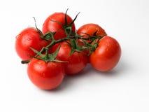 Tomatväxt Arkivfoton