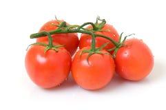 tomatvine Arkivbild