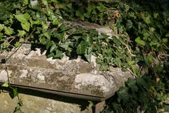Tomb. Ivy growing on a tomb Stock Images