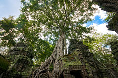 Tomb Raider Old Building Tall Tree Royalty Free Stock Photos