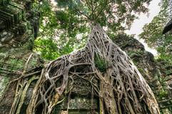 Tomb Raider Old Building Tall Tree Stock Photography