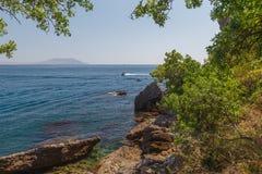 Tomba del pino Cedro sulle rive del mare fotografia stock libera da diritti