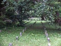 Tomba dietro gli alberi Immagine Stock
