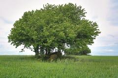 Tomba megalitica Sassen 4 in Meclemburgo-Pomerania, Germania Fotografie Stock Libere da Diritti