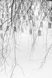 Tomba, ramo di albero asciutto e neve nell'orario invernale al cimitero di Arlington Fotografia Stock