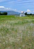 Tomba sul giacimento del riso, Indonesia Fotografie Stock Libere da Diritti