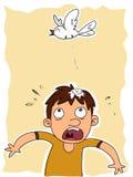 Tombadilho do pássaro na cabeça ilustração stock