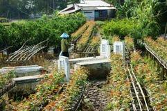 Tombe su terreno coltivabile Fotografia Stock