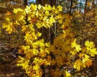 Tombez dans de pleines couleurs profondément à l'intérieur de la forêt images libres de droits