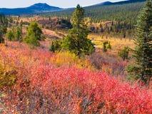 Tombez dans la région sauvage nordique, Yukon T, Canada Photographie stock libre de droits