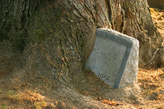 Tombstone. A tombstone surrounded by a grown tree Royalty Free Stock Images