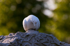 Tombstone with dove. Thorny textured tombstone with white stone dove Royalty Free Stock Images