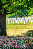 Tombstones and flowers at the Arlington National Cemetery Royalty Free Stock Image