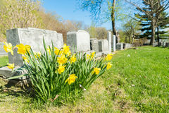 Tombstones in Montreal Cemetery Royalty Free Stock Photography