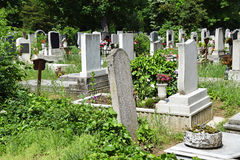 Tombstones. In the public cemetery Royalty Free Stock Photos
