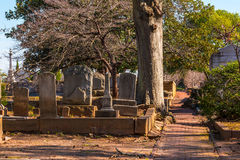 Tombstones, trees and footpath on Oakland Cemetery, Atlanta, USA. View of the tombstones, trees and footpath on the Oakland Cemetery in sunny autumn day, Atlanta Royalty Free Stock Photos