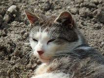 Tomcat имбиря спать стоковое изображение
