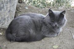Tomcat lizenzfreie stockfotos