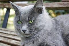 Tomcat stockbild