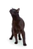 Tomcat 免版税库存照片