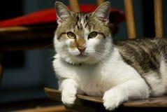 tomcat zdjęcie stock