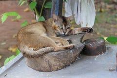 tomcat Стоковое Фото