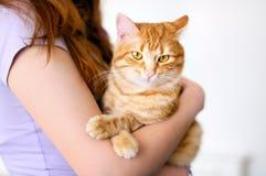 Tomcat alaranjado bonito imagem de stock