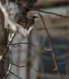 Tomcat auf einem Hintergrund von Baumasten Stockbild