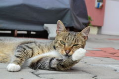 Tomcat bereiten vor sich, sein Eisbein zu lecken lizenzfreie stockfotos