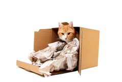 Tomcat in cardboard Royalty Free Stock Photography