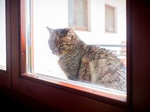 Tomcat che esamina finestra immagini stock