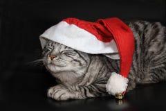 Tomcat con il cappuccio della borsa della gelatina fotografie stock libere da diritti