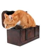 Tomcat dans le coffre photographie stock libre de droits