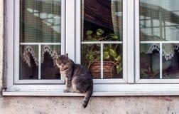 Tomcat dans une fenêtre photographie stock