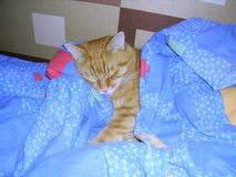Lovely Cat-Son. Tomcat decided to go to sleep. Cute photo of cat Stock Photo