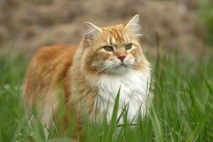 Tomcat dopatrywania ptak zdjęcie stock