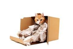 Tomcat en cartulina fotografía de archivo libre de regalías